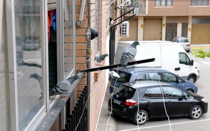 El Ayuntamiento de Alcañiz pide a sus vecinos que no alimenten a palomas y otros animales en espacios públicos