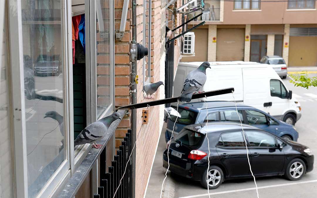 Vecinos de Alcañiz se quejan de conductas incívicas como dejar residuos en las calles que atraen palomas./ Ayto. de Alcañiz
