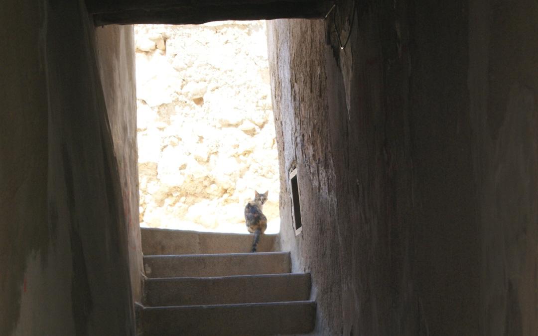 Imagen de archivo de un gato en una calle de Albalate del Arzobispo. / L.C.