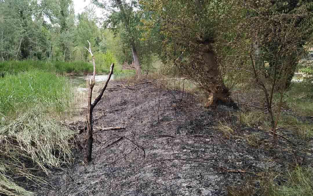 Daño originado por el fuego en la ribera del Guadalope./DPT