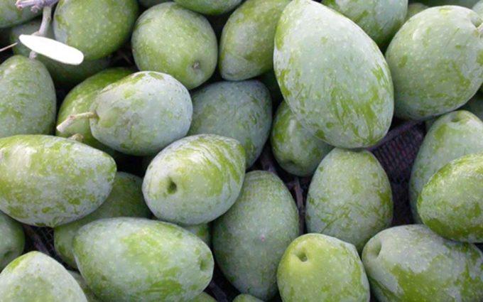 La Oliva Caspe entra en el selecto club del Arca del Gusto de Slow Food