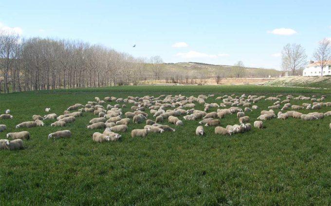 Abierto el plazo para pedir subvenciones de la DPT de apoyo a la ganadería y la agricultura