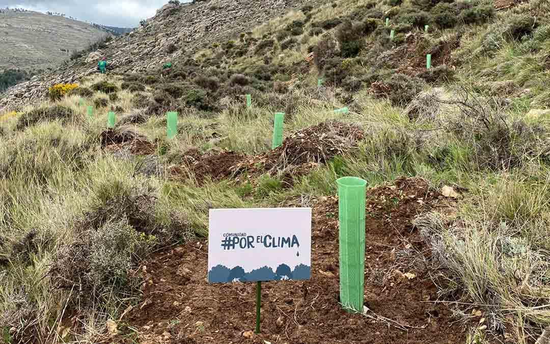 Reforestación en el monte Solana de la Sierra, en La Zoma. Para ello, están plantando 16.365 árboles./Comunidad por el Clima