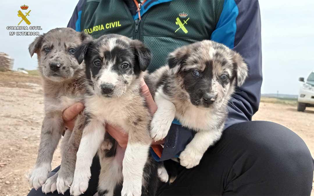 La Guardia Civil y los ciclistas que dieron el aviso salvaron a los tres cachorros./ Guardia Civil
