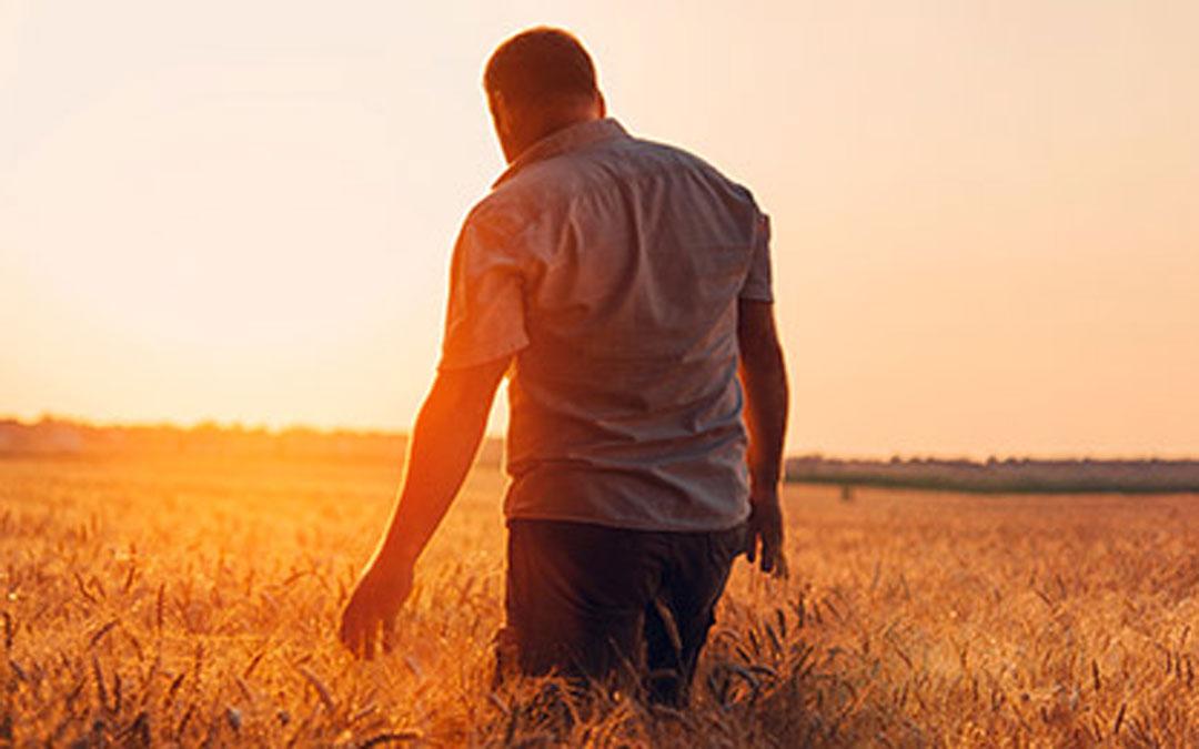Imagen de un agricultor en un campo de cereal. Foto. Caja Rural de Teruel