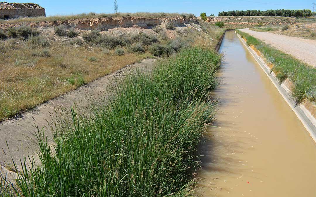 Una de las salidas del canal de la Estanca, totalmente inhabilitada por los juncos./ M.C.