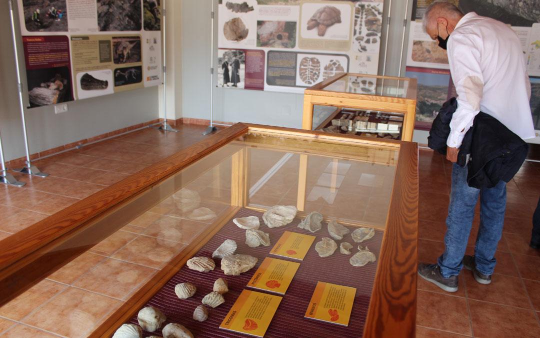 Buena parte de los fósiles que se recogían en las excursiones escolares en los años 70 se han catalogado y se han expuesto también. / B. Severino