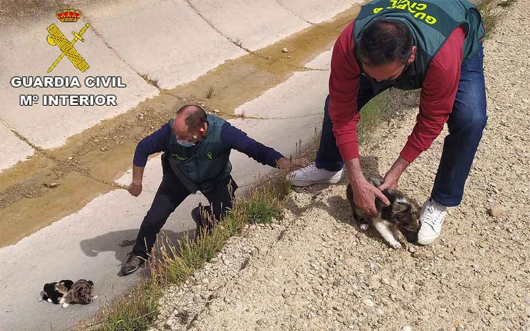 La Guardia Civil rescata a los tres cachorros abandonados en el canal Calanda-Alcañiz./ Guardia Civil