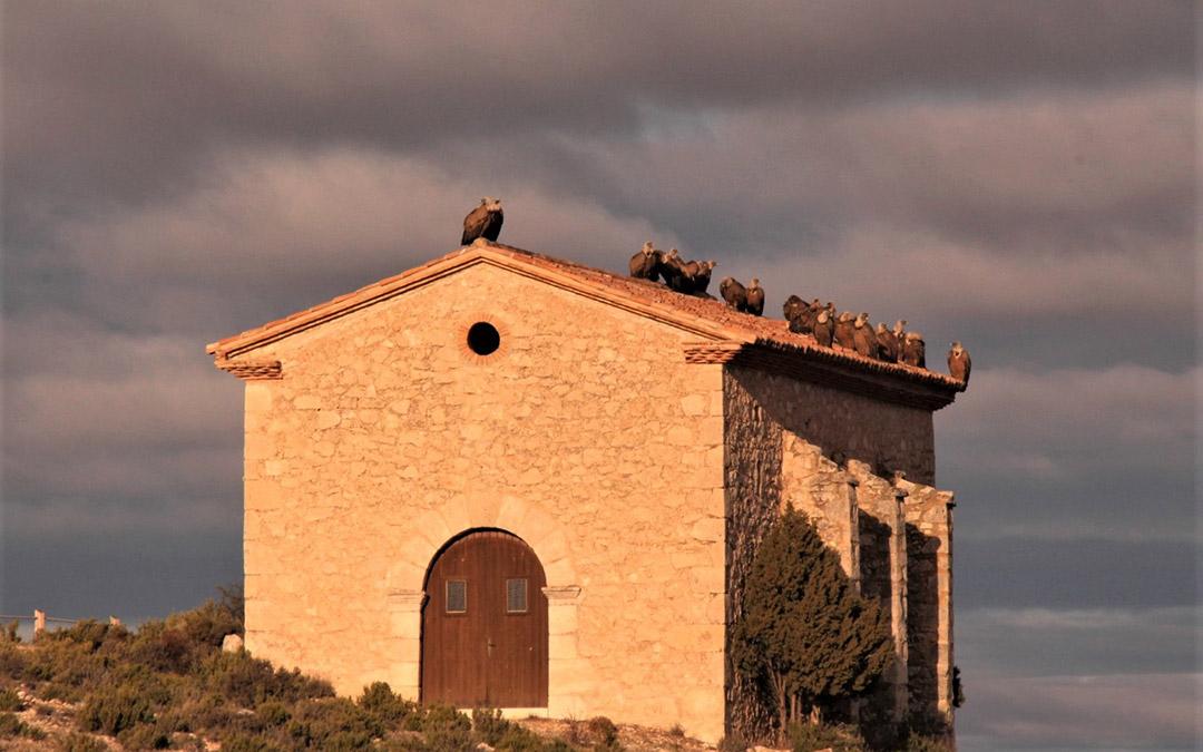 Buitres en el Mirador de la ermita de Santa Bárbara