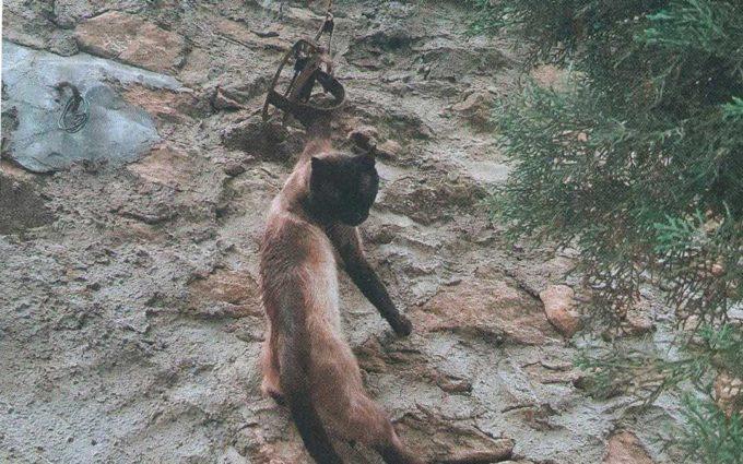 La Guardia Civil investiga a un vecino del Bajo Aragón por maltrato animal