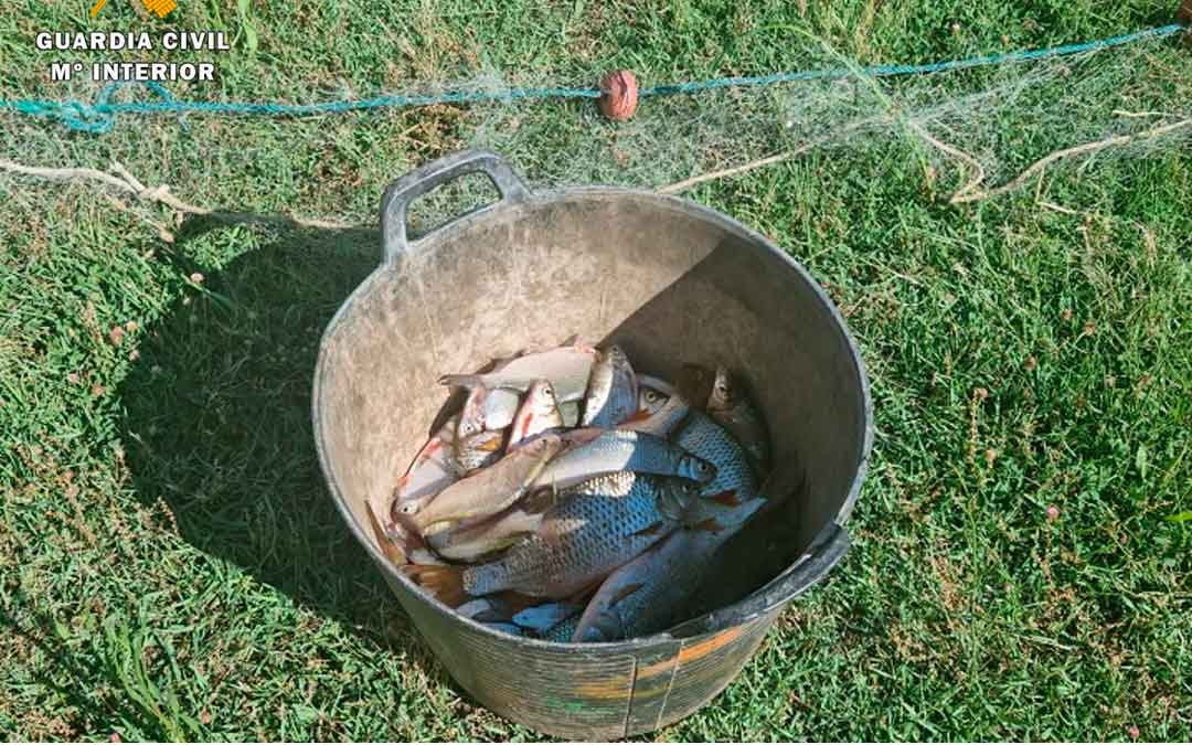 En las redes había más de 50 peces vivos que se devolvieron al agua, los que ya se hallaban muertos fueron gestionados como residuos / G.C.