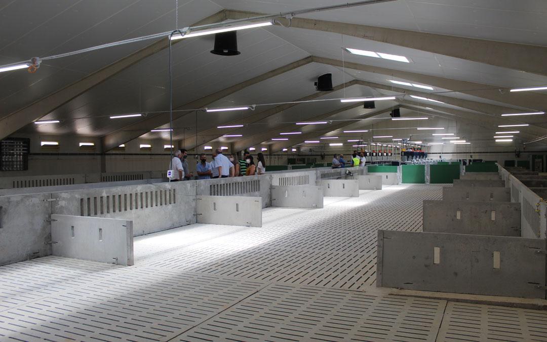 Interior de la explotación porcina del Grupo Costa en Samper de Calanda. / B. Severino