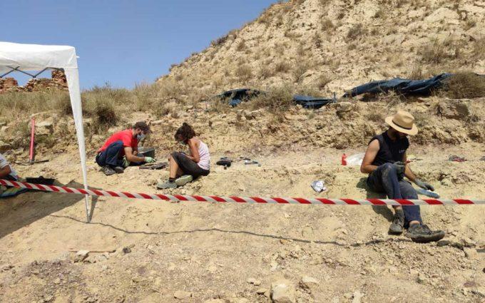 Excavan en Alacón un yacimiento que esconde los restos fósiles de un «enigmático» dinosaurio