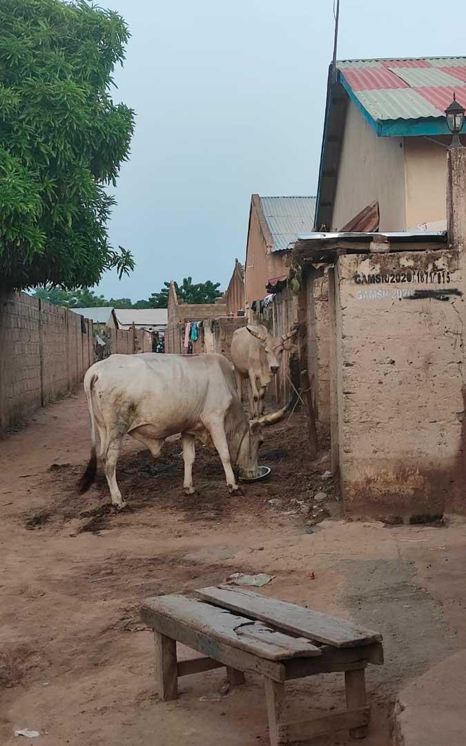 Algunos animales en el pueblo gambiano / P. P.