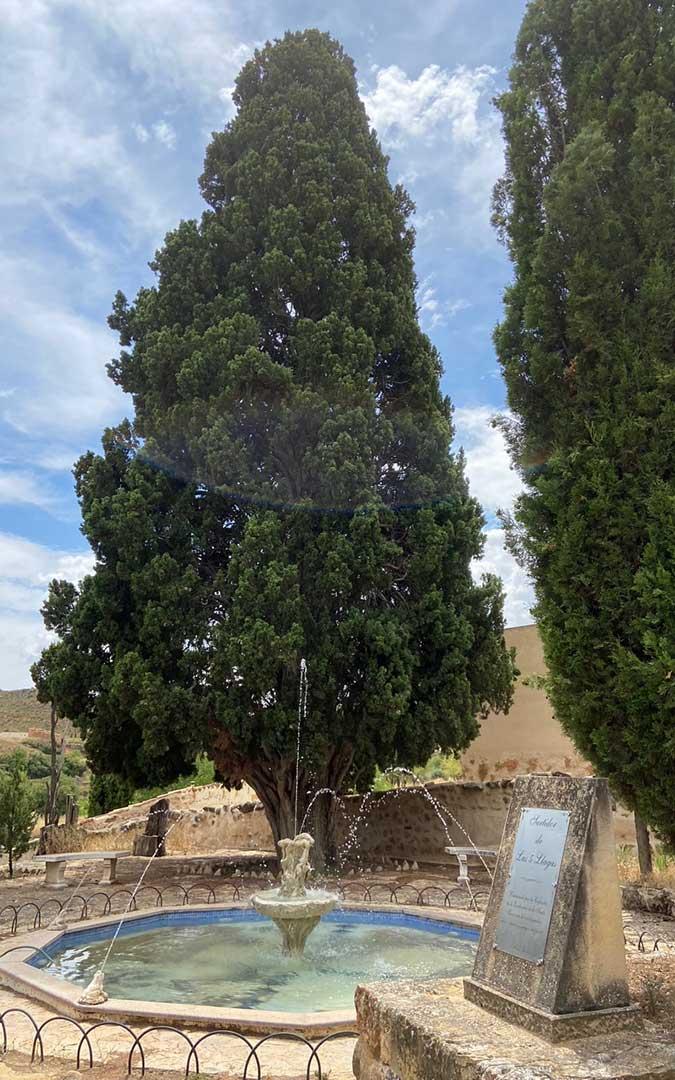 Ciprés madre del Calvario de Alloza, árbol singular que se busca proteger. A sus pies, la fuente de las 5 llagas./ Alicia Martín