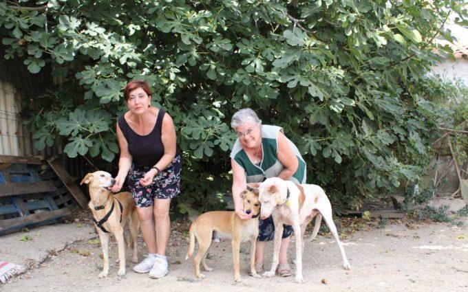 La protectora de Caspe busca un nuevo hogar para sus perros y gatos