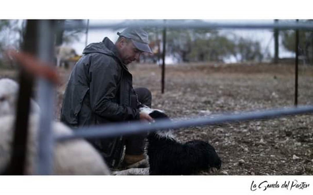 Alberto Riba, ganadero de Valderrobres, en un fragmento del documental con sus ovejas y los perros que adiestra. / La Senda del Pastor